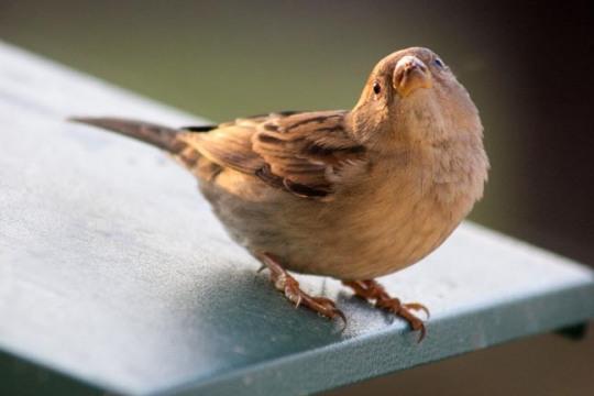 blbird