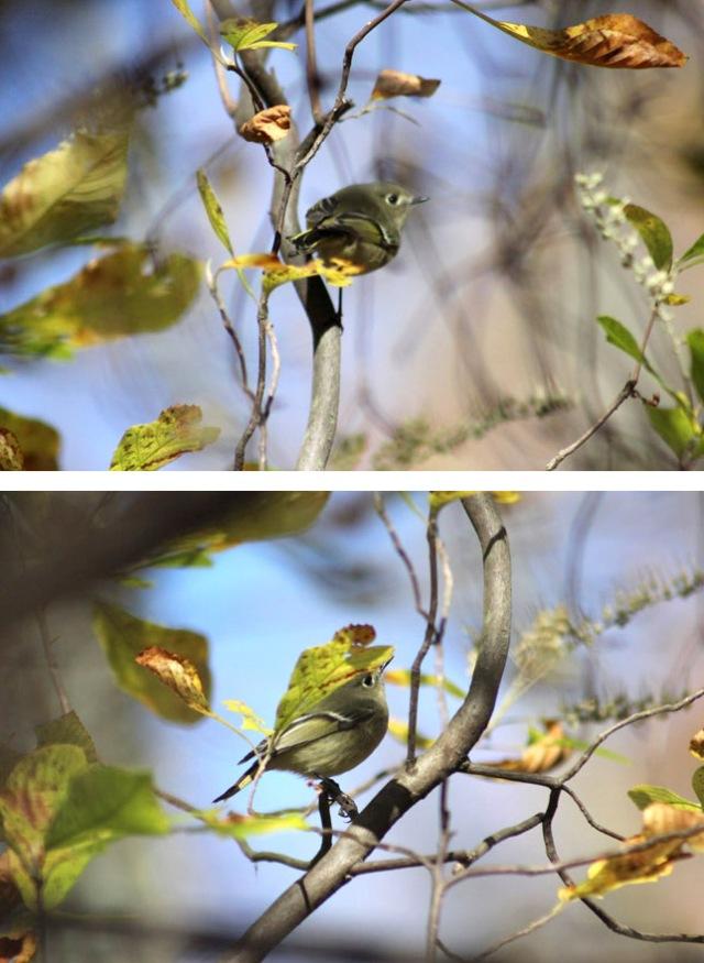 bdreamybirds
