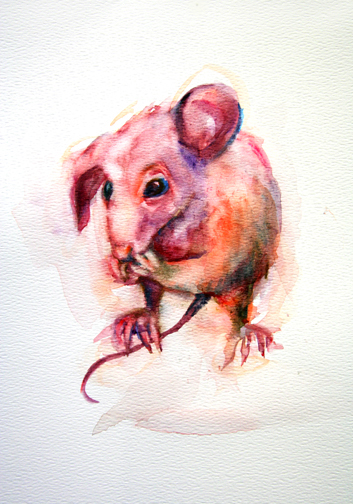 bpinkmouse copy