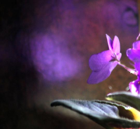 bviolet